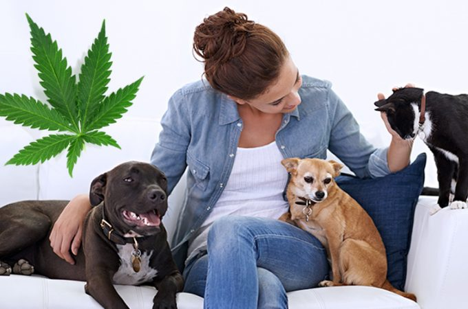 Cannabis and CBD Products – What Pet Owners Should Know About?