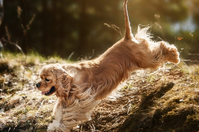 Reaching Your Pet Market Along With Personalization